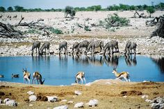 Okaukuejo waterhole, Etosha reserve, Namibia. Pour yourself a Windhoek lager and wait to be amazed