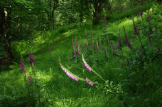 Still, a hell of a year for foxgloves!