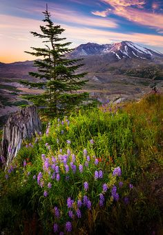 Mount Saint Helens, which erupted in 1980