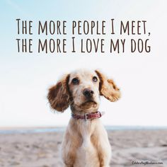 The more people I meet, the more I love my dog. #celebratingweakness #quotes #dog #pet #puppy