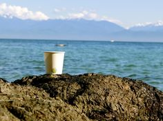 Compostable, made from sustainable resources. Compost, Glass Of Milk, Sustainability, Plant Based, Coffee Cups, Hot, Nature, Coffee Mugs, Naturaleza