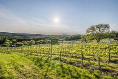 Der Spätsommer ist im Südburgenland eine der schönsten Jahreszeiten: Wein, Kulinarik und das Winzer- und Trachtenfest Stegersbach sind im eine Reise ins Hotel Larimar**** Superior Wert! Näheres unter http://blog.larimarhotel.at/wellness-wein-stegersbach/