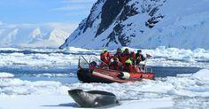€2,500 Off on Fares !! Explore Antarctica With Great Adventures. Go through Antarctica Sale 2017 @Exp_Voyages . http://www.expeditionvoyages.in/landing/?gclid=CjwKEAjw6ZLOBRCLyNXAwfCPmlQSJADHPIJbtFfc04_21KdTsir8D0IVo1mxWSLypo9C760P8YlV8BoCa2vw_wcB