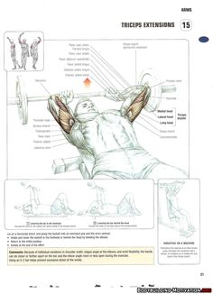 Training Anatomy - Arms - Triceps Extensions