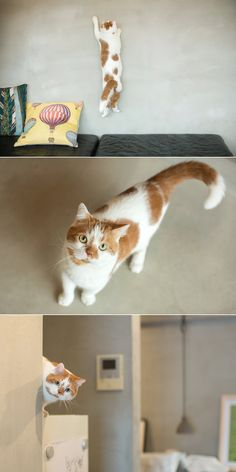 【ELLE】写真家・井上佐由紀さんの猫=どんこ/インスタグラムで話題のおしゃれ猫|エル・オンライン