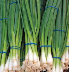 $3 Plant Ramrod Scallion Seeds in your organic vegetable garden for winter harvests. Learn when to plant onion seeds in our How to Grow Onions guide online.