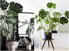 """Vi kan vist ikke rigtigt komme udenom, at grønne planter er """"the shit"""" i forhold til boligindretningen for tiden, og jeg er vild med det! Men har man ikke grønne fingre, kan det måske virke lidt uoverskueligt at hoppe med på trenden – for hvordan passer man nu lige planterne? Og hvordan forklarer man blomsterhandleren, hvad det er for en plante man gerne vil købe, når man ikke aner, hvad den hedder? Disse fortvivlelser har jeg forsøgt at komme til livs med denne lille planteguide, som jeg…"""