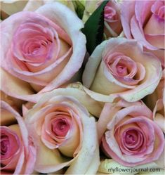Flower Markets Near and Far-Costco Roses-myflowerjournal