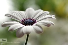 Jewel by Tracy99. Please Like http://fb.me/go4photos and Follow @go4fotos Thank You. :-)