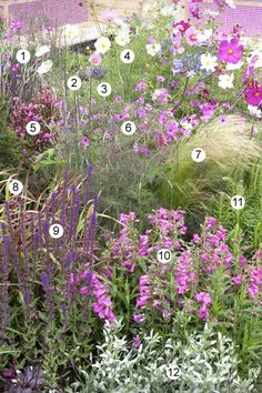 pink border: 1 Lychnis coronaria, bloei 7-8 | 2 Foeniculum vulgare 'Giant Bronze', bloei 7-8 | 3 Agapanthus africanus, bloei 7-8 |4 Cosmos bipinnatus, bloei 7-10, eenjarig. 5 Gaura lindheimeri 'Siskiyou Pink', bloei 7-10 | 6 Geranium psilostemon, bloei 6-7 | 7 Stipa tenuissima, bloei 7-8 8 Imperata cylindrica 'Red Baron', bloei 5-6 |9 Salvia nemorosa, bloei 6-8 | 10 Penstemon 'Apple Blossom', bloei 7-9 liatris spicata bloei 6-9 | 12 Winde Convolvulus cneorum, bloei 6-9