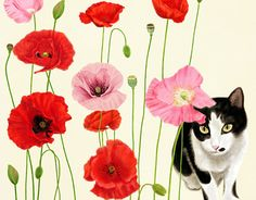 "Check out new work on my @Behance portfolio: ""Poppy Flowers and a cat"" http://on.be.net/1UDFbnF"