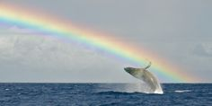 """A passing weather system caused some uncharacteristic weather in Hawaii on Tuesday: bouts of heavy rains and strong winds. The """"storms"""" gave us the perfect excuse to think about all the rainbows that would eventually be falling majestically over the islands."""
