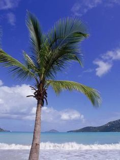 Palm Tree, Magens Bay, St Thomas, Usvi by Jim Schwabel Rv Camping, Camping In Maine, Camping Chairs, Camping Equipment, Magens Bay St Thomas, San Diego, St Thomas Usvi, Acadia National Park Camping, Cruise Travel