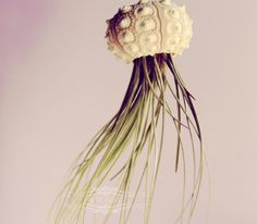 Voyager Jellyfish Air Plant // Octopus Sputnik Sea Urchin Wedding Favor Decor Gift DIY shell hanging art. $15.00, via Etsy.