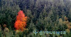 Contenuti utili e originali per un Sito Web ottimizzato: Cosa devi sapere sulla SEO e come ottimizzare i contenuti del tuo Sito Web #seo Utila, Marketing, Plants, Plant, Planting, Planets