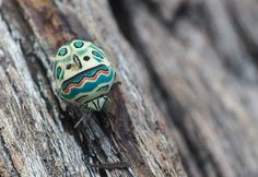This is a Picasso bug from South Africa. It's so beautiful, it looks hand-painted.