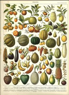 A vintage illustration of a wide variety of fruits and vegetables from the book, Nouveau Larousse Illustre by Larousse, Pierre, Augé and Claude, Digitally enhanced from our own antique chromolithograph. Vintage Botanical Prints, Botanical Drawings, Botanical Art, Vintage Prints, Botanical Posters, Vintage Posters, Antique Illustration, Botanical Illustration, Illustration Art