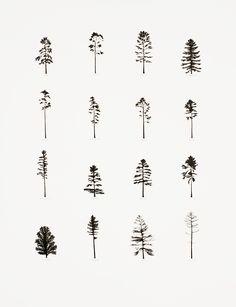 KatieHolten.PineTrees small.jpg