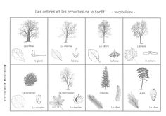 Mes fiches de sciences Primary Science, Montessori Science, Fitness Gifts, Nature Crafts, Science Projects, Science Nature, Tattoo Quotes, Education, Recherche Google