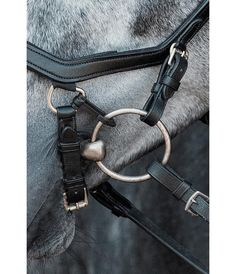 Horse Stables, Horse Tack, Hobby Horse, Horse Girl, Equine Photography, Saddles, Beautiful Horses, Equestrian, Horse Stuff
