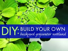 How to Build a Simple Backyard Greywater System | Inhabitat - Sustainable Design Innovation, Eco Architecture, Green Building