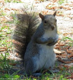 Feed me... i soooo hawngry.......Squirrel