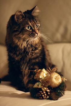 Christmas Whispurrs