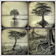 The Roots Series  Set  Black and White  Nature by saranorris, $45.00