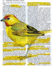 Birds in Books by Pennsylvania artist and designer Paula Swisher Book Page Art, Colossal Art, Dictionary Art, Mellow Yellow, Color Yellow, Yellow Black, Art Plastique, Bird Art, Altered Art