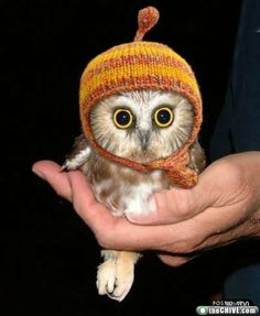 How cute is this baby owl!