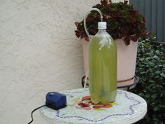 I created this instructable to show how to build a simple algae based CO2 scrubber for home or apartment use. The basic design shown here will scrub its own consumption and approximately 24 pounds of carbon dioxide from the atmosphere every year. This is approximately the CO2 produced in the production of 17kW of electricity. This device may be scaled up to process larger quantities of CO2. The carbon dioxide is consumed by the algae which release oxygen. In part I the scrubber consists of a…