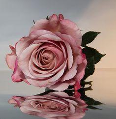 Homemade Rose Water Recipe