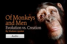 The difference in the outlook of Darwin's theory of evolution vs. a purpose driven approach of creationism; and how this affects morality today.