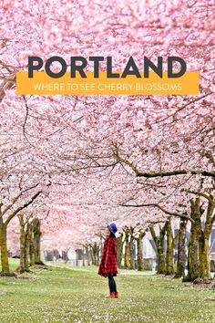 Where and When to Find Portland Cherry Blossoms // Local Adventurer #springtravel #cherryblossom #pnw #pacificnorthwest #portland #oregon #pdx #pdxnow