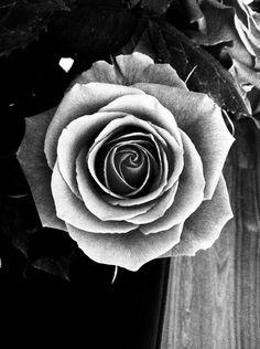 Hergestellt von Stella Luo Tätowierern in Toronto, Kanada - rose tattoos Neue Tattoos, Body Art Tattoos, Black And White Roses, Black Swan, Rose Reference, Gothic Flowers, Rosen Tattoos, Tattoo Project, Rose Pictures