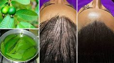 La pérdida de cabello afecta tanto a los hombres como a las mujeres. A veces, no importa el esfuerzo y lo que se les pone en los cabellos, parece no tener solución.\r\n[ad]\r\nEste remedio simple es una solución natural extremadamente eficaz contra la pérdida de pelo.\r\n\r\nLas hojas de guayaba son probablemente la mejor solución natural para la pérdida del cabello y también son eficaces en el aumento de las plaquetas en personas con fiebre del dengue.Las hojas de guayaba son ricas en…