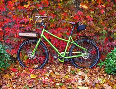 Civia Loring with Fall Colors | Flickr - Photo Sharing!