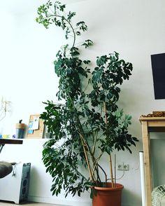 Neuer Kollege im Arbeitszimmer by muhh