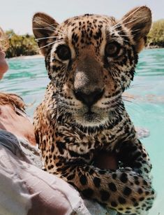 The best best cool animal pictures animals exoticos salvajes video funny wild sea animals animals cutest animals cutest videos animals wild animals cats baby kittens dogs puppies Cute Little Animals, Cute Funny Animals, Cute Dogs, Cute Creatures, Beautiful Creatures, Animals Beautiful, Majestic Animals, Beautiful Cats, Animals Tumblr