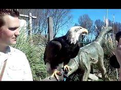 Vogelshow |Avonturia De Vogelkelder | Adelaar