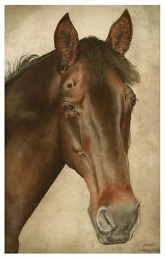horse portrait in watercolour by Tracy Hall