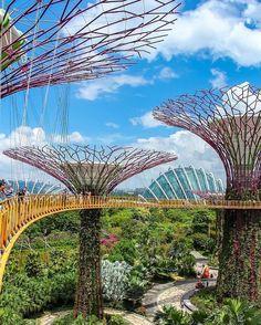 A #Singapour les arbres sont très différents des nôtres  #TopitoVoyage  : @visitsingapore @ivanaljubas