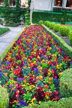 Butchart Gardens - V