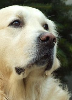 Handsome Duke Cute Dogs Breeds, Cute Dogs And Puppies, Doggies, Best Dogs For Families, Family Dogs, Beautiful Cats, Animals Beautiful, Beautiful Creatures, San Bernardo