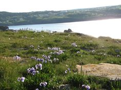 Flatrock Beamer -- love going here and just sit amongst the grass and flowers.and listen to the ocean Newfoundland, Grass, Ocean, Spaces, Mountains, Nature, Flowers, Pictures, Travel