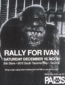 Turns out that Ivan, the character in the book Aethan and I are reading, is a real gorilla ...his story is amazing, the book is fantastic!