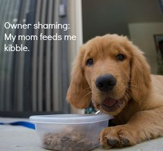 Food Rules for Dogs - For those who need a little help navigating the pet food section.