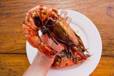 Crevette géante tigrée, 350 grammes © Camille Oger