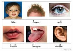 Vocabulaire classifié divers thèmes Fofyalecole OK OK OK 3 Year Old Activities, Infant Activities, Bingo, Sequencing Cards, Montessori Materials, Dramatic Play, Science And Nature, Kids And Parenting, Homeschool