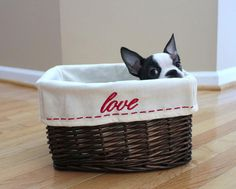 Cute pictures of Boston Terrier dogs! These pictures of Boston Terriers puppies will melt you heart and will make you smile! 40 pics of cute puppies! Terrier Breeds, Terrier Puppies, Pitbull Terrier, Dog Breeds, Terriers, Boston Bull Terrier, Boston Terrior, Cute Puppies, Cute Dogs